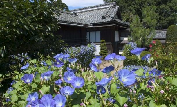 夏の庭の写真