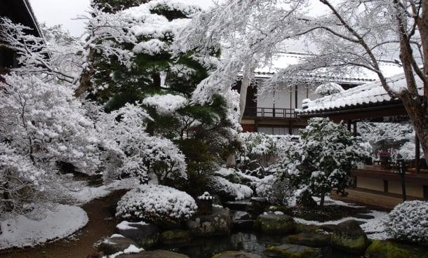 冬の庭の写真