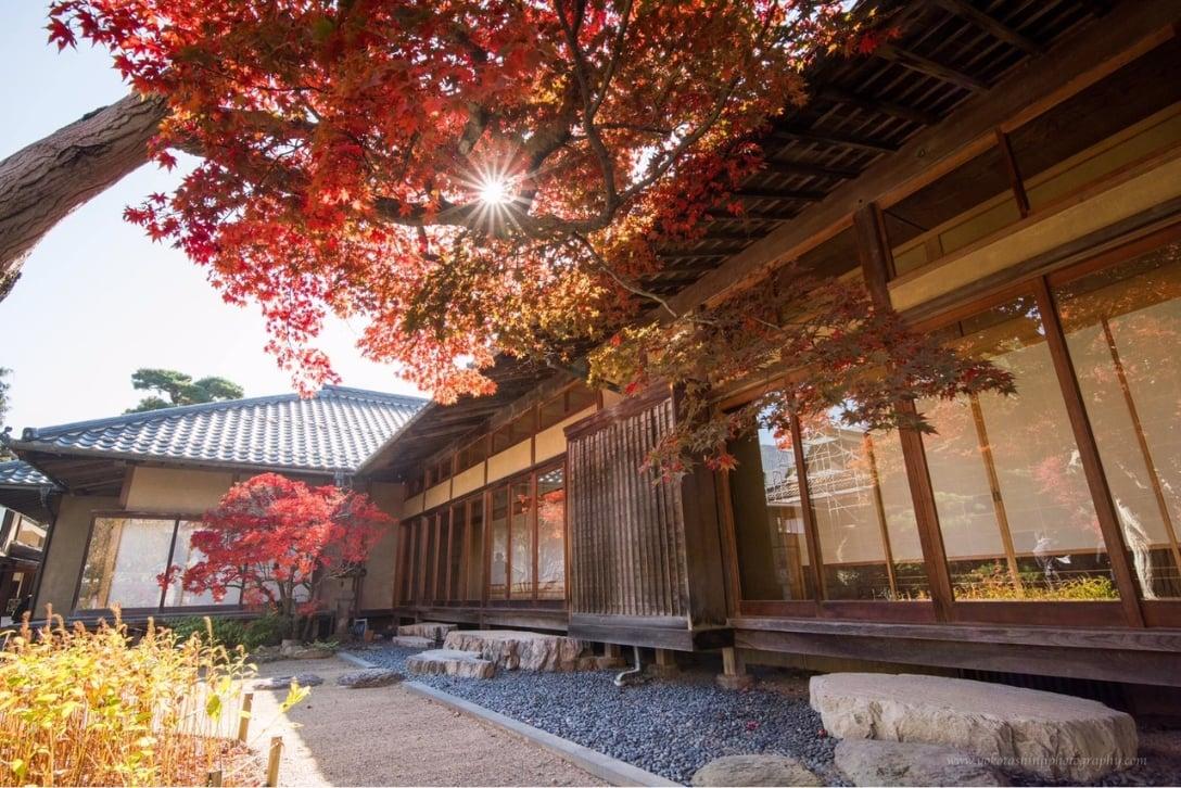 秋の庭園の写真