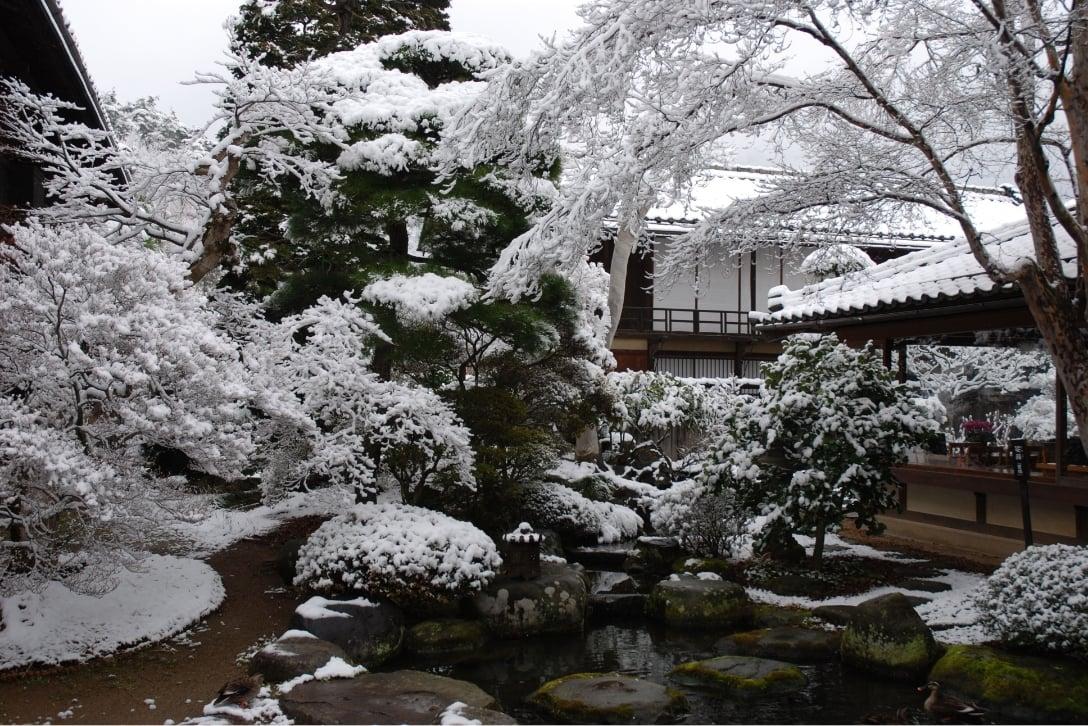 雪が積もった庭園の写真