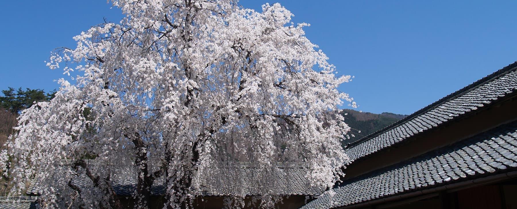 田中本家の春の写真